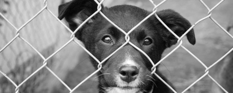 Realizovaný odchyt túlavých psov - Ilustračná fotografia